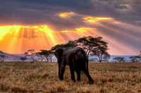 elephant in the field