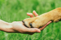 Dogs and Humans: Evolutionary Friends