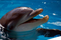 The Dolphin With The Inspiring Tail
