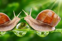 Image of snails